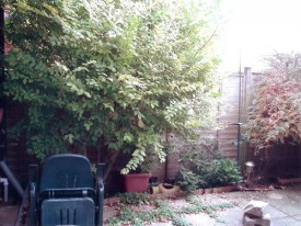 Low Maintenance Courtyard Before 1